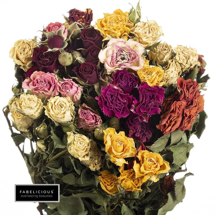 <h4>Dried Rosa tros mix</h4>
