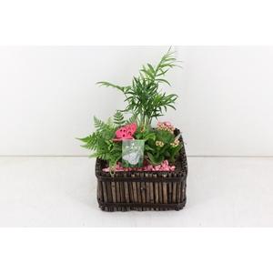 arr. PL - Bamboe 4kant 401/2 - roze