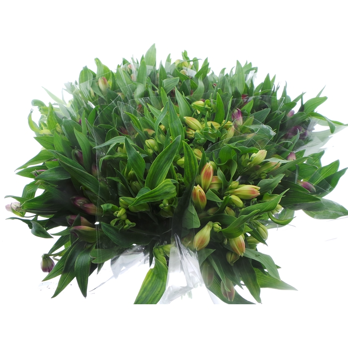 <h4>Bouquet Mono Alstro x5 mix 60cm</h4>