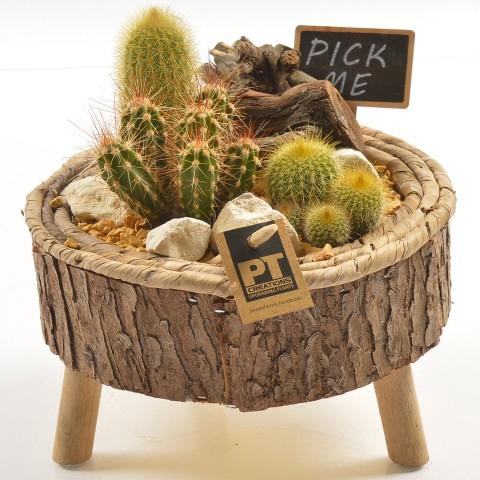<h4>PTCT9821 Arrangementen Cactus</h4>