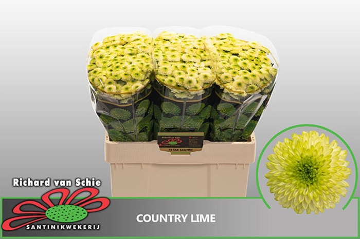 CHR SAN COUNTRY LIME