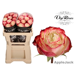 R GR APPLE JACK COLD