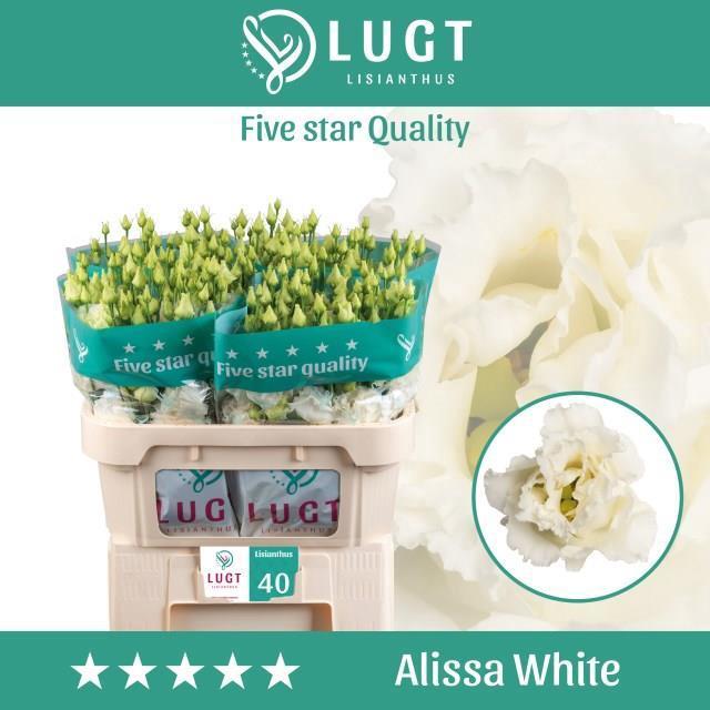 <h4>EUS G ALISSA WHITE</h4>
