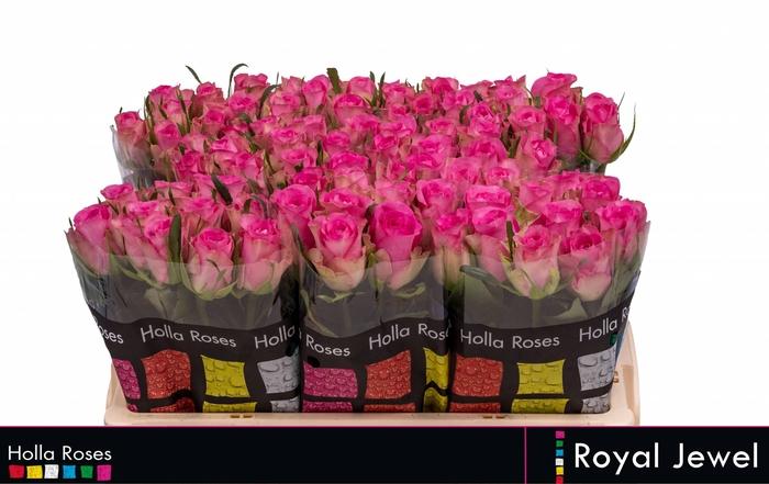 <h4>Rosa grootbloemig Royal Jewel</h4>