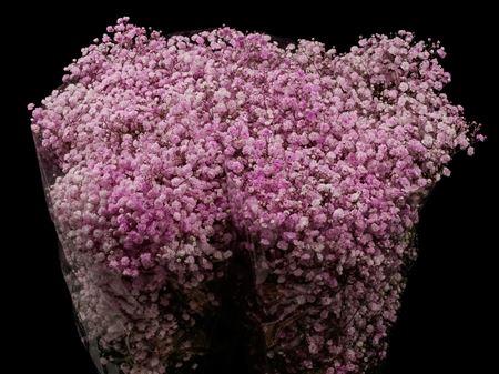 <h4>Gyps Xlence Light Pink X25 40gr</h4>