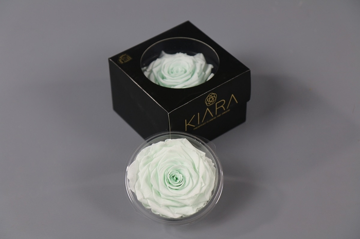 <h4>Rosa Preserved Minty Green Solitarie</h4>