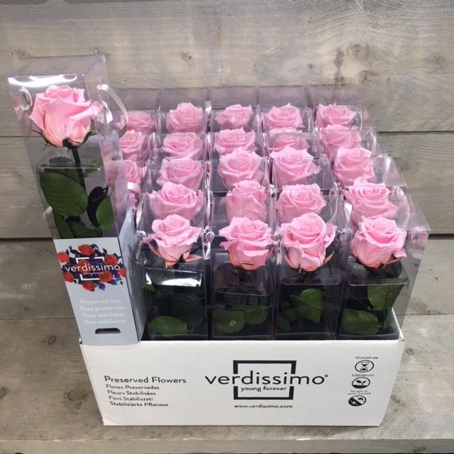 <h4>R PR Amorosa Mini Bridal Pink</h4>