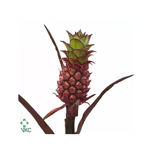 ANANAS BABY PINK
