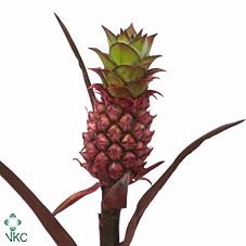 Ananas Perfetto Brazillie