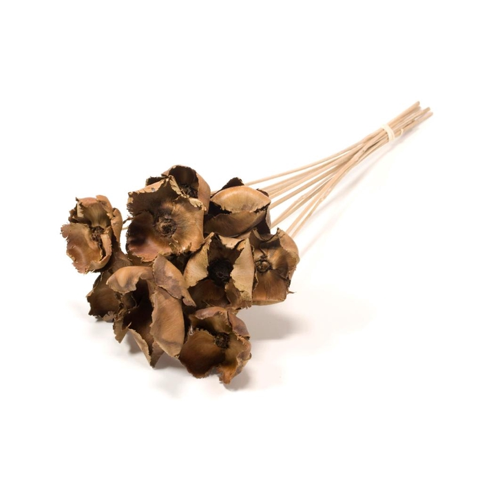 <h4>DRIED FLOWERS - PALMCUP ON STICK 10PCS NATURAL</h4>