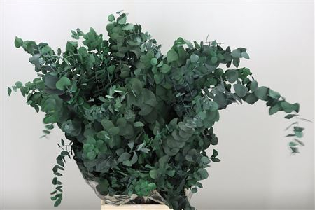<h4>Dried Cynerea Green Preserved</h4>