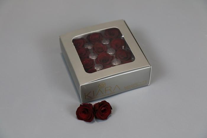 <h4>Rosa Preserved Burgundy Mini Petite</h4>