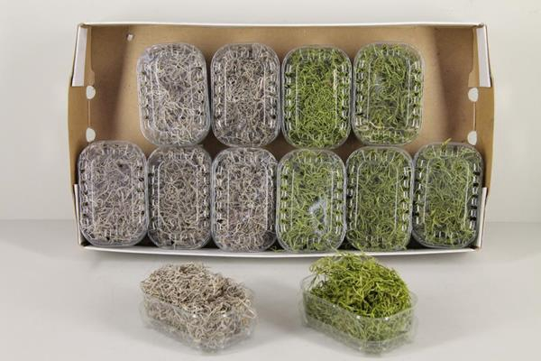 <h4>Moss Tillandsia Box Mixed</h4>