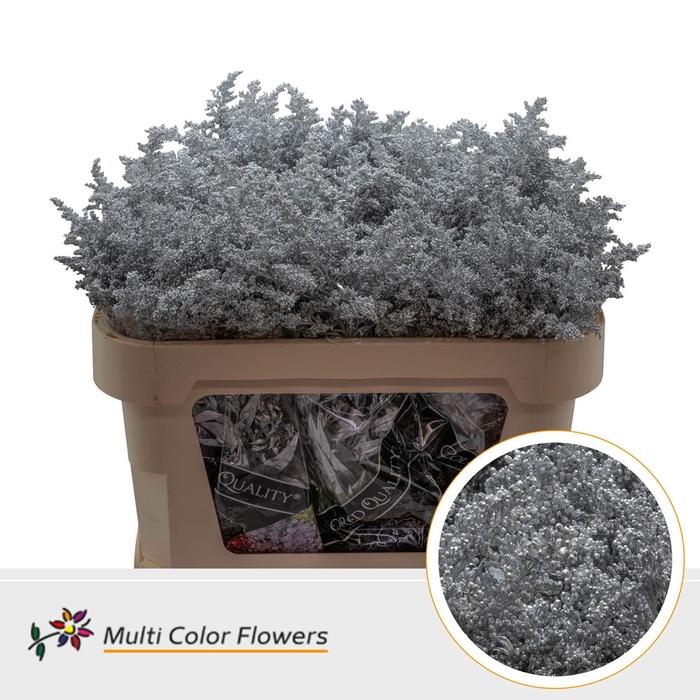 <h4>Solidago Zilver</h4>