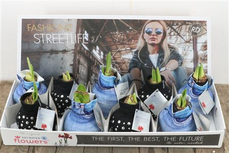 <h4>Wax Hipp Fashionz Streetlife</h4>