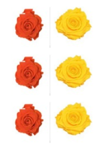 <h4>R Gr Prsv Orange - Yellow</h4>