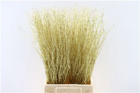 <h4>BERK 60CM GOLD BUNCH</h4>