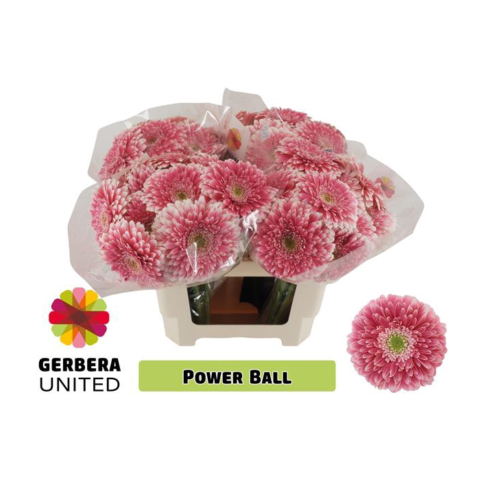 <h4>GE GB POM POWER BALL</h4>