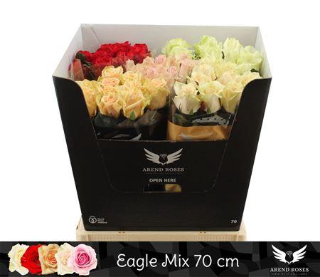 <h4>R Gr Eagle Mix</h4>