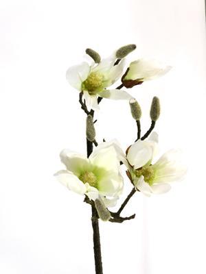 <h4>Silk Magnolia White  90cm Stem</h4>