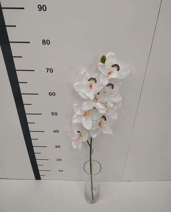 <h4>Haste cymbidium blanco</h4>