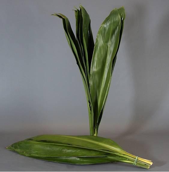 <h4>Cordyline Green Tie</h4>