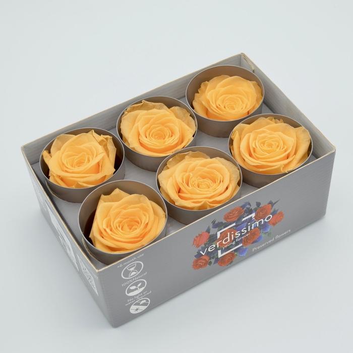 <h4>R PR M Peach</h4>