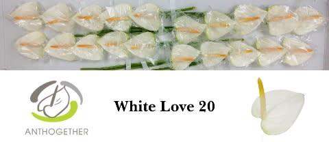 <h4>ANTH A WHITE LOVE 20.</h4>