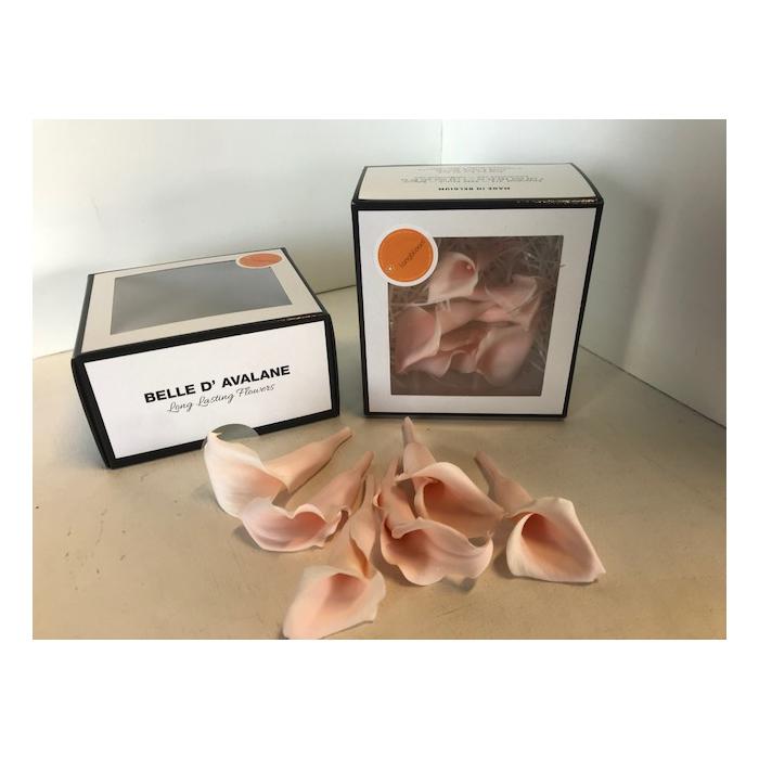 <h4>Calla Roze (pink100)</h4>