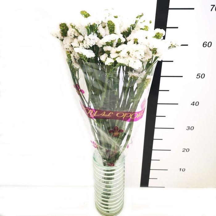 Statice blanco (R. OPORTO)