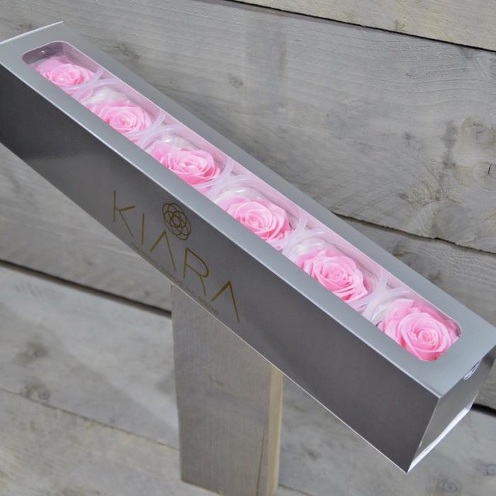 <h4>R PR Splendid Bridal Pink</h4>