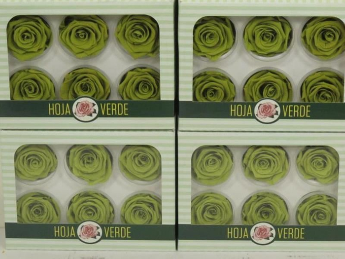 <h4>Preserved Roses Lime Green</h4>