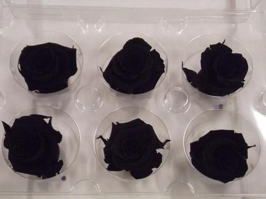 R Prs Black Petite