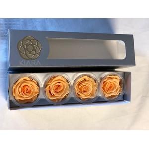 Super Rose Perfect Peach (4)