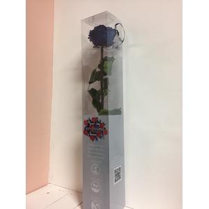 Roos op steel xl Plexi 55cm Perzik