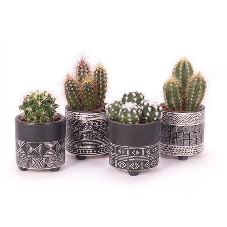 <h4>Cactus 5,5 Cm In ''maya'' Keramiek</h4>