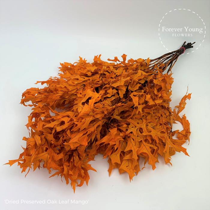 <h4>Dried Preserved Oak Leaf Mango</h4>