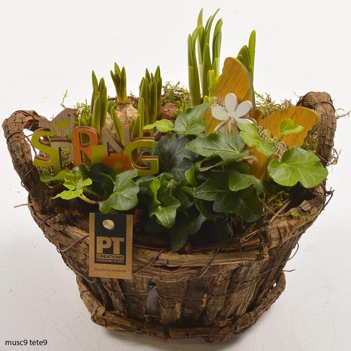<h4>Arr.   Tuinplanten L%</h4>