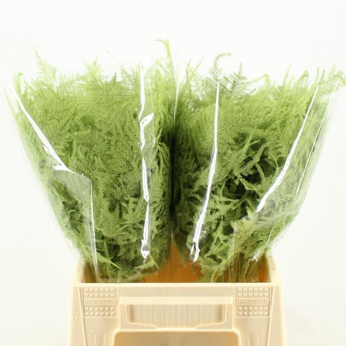 <h4>1e Veren Klb H% Mint Green</h4>