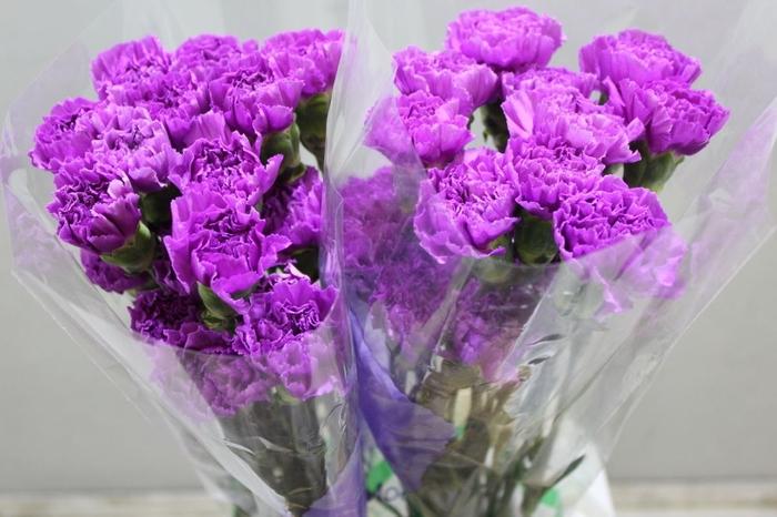 <h4>Dianthus Florigene Moonlite</h4>