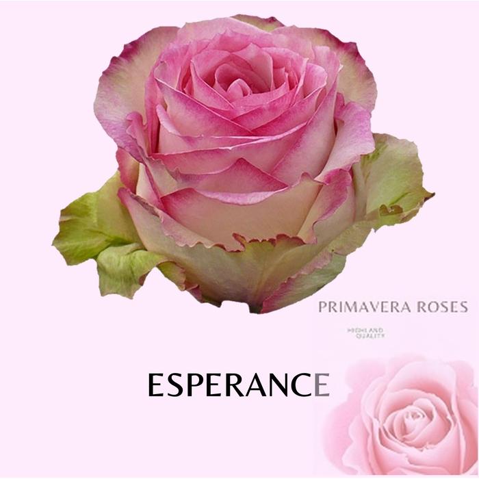 <h4>R GR ESPERANCE</h4>