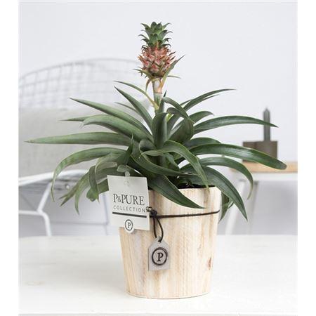 <h4>Opm Pc02-700 Ananas Amigo Wood</h4>
