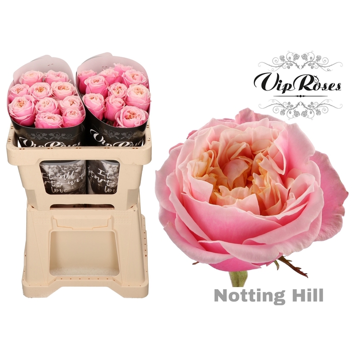 <h4>R GR NOTTING HILL x 20</h4>