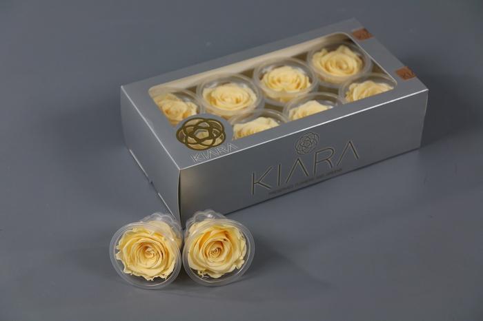 <h4>Rosa Preserved Champagne Rose</h4>