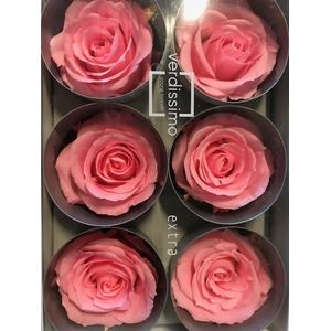Rose Extra Bridal Pink RSX/2470