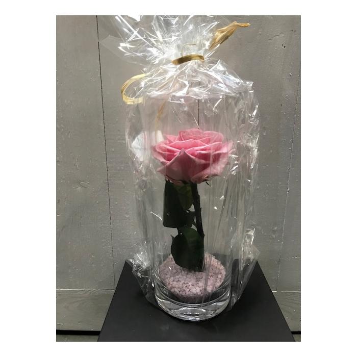 <h4>Glass XL Rose Pink 30cm</h4>