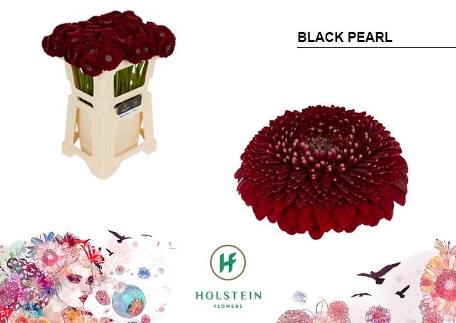 <h4>GE BV water Gerponi Black Pearl</h4>