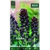 Z Fritillaria Persica