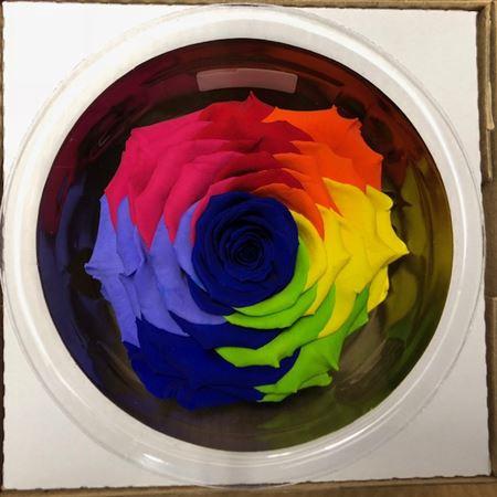 <h4>Pr 5.4 Rainbow Blu-03 Xxl</h4>