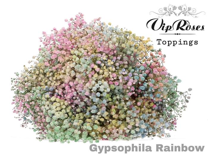 <h4>GYPS PA PASTEL!! RAINBOW</h4>